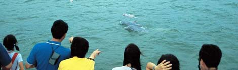 Dolphin Watching in HK