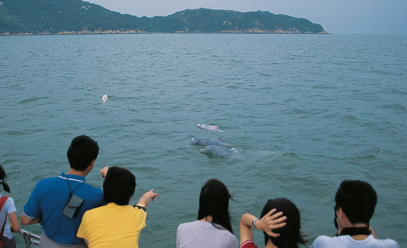 Section 2 - Dolphins&Whales - 2. Dolphin-Watching