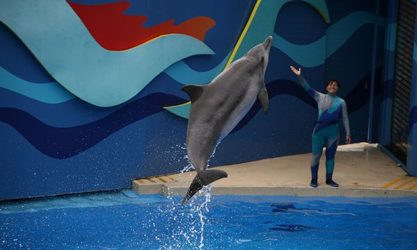 whales and dolphins in captivity The captivity working group is developing resources that will strengthen the work of the wca and its partners on issues concerning the captivity of cetaceans.