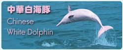 section2_dandw_cihk_chinese_white_dolphins2