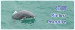 section2_dandw_cihk_finless_porpoise2