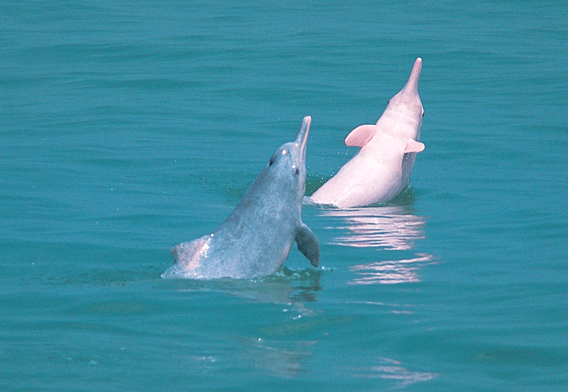 Be a dolphin friend